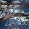 Frozen Logs (Tim Noonan) Tags: light shadow snow colour texture ice digital frozen logs icicles fleursetpaysages enteredinsyb