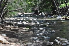 DSC_0387 (oblomberg) Tags: bigsur hwy1 pfeifferstatepark montereyca