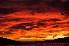 Early morning in Faskrudsfjordur (*Jonina*) Tags: iceland ísland faskrudsfjordur fáskrúðsfjörður morning morgunn sky himinn clouds ský silhouettes skuggamynd birds fuglar sunrise sólarupprás jónínaguðrúnóskarsdóttir 500views 25faves 1000views 50faves