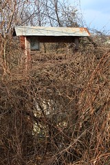 Well, well, what have we got here... (Mike_t_by_the_sea) Tags: plants house abandoned nature water vines dry icon christian well vegetation desolate orthodox deserted conquer reclaim regain
