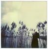 Pola Nord (La Tì / Tiziana Nanni) Tags: film portraits polaroid sx70 luca analogue ritratti ritratto pola impossible polaroidsx70 pellicola analogico istantanea polaroidportrait iamyou tizianananni