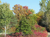 Fall Foliage (3) (bookworm1225) Tags: zoo october 2014 minnesotazoo northerntrail tropicstrail