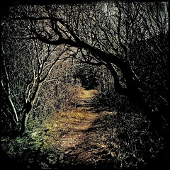 Just a pathway... (iEagle2) Tags: spring sweden path pathway iphone grundsund swedishwestcoast iphone4 hipstamatic