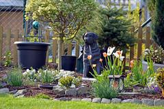 Unser Garten (Gnter Hentschel) Tags: flower germany garden deutschland nikon europa blumen alemania nrw allemagne garten bunt germania nikond3200 d3200