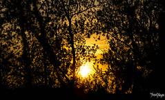 golden sun (thrbnzzyzx) Tags: sunset sky tree nature clouds sonnenuntergang hamburg natur himmel wolken baum