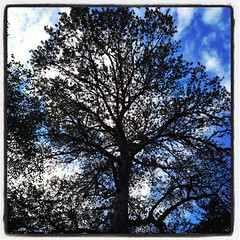 InstagramTree1012a (homeboy63) Tags: fall humboldt 2012 headwatersforest