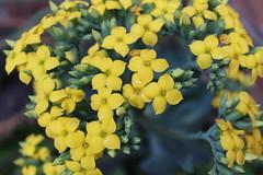 IMG_0669 (luisamzapata) Tags: flowers yellow day paisaje