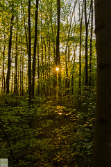 Exploring the nature (Dominik.D - Photography) Tags: trees summer sun green nature forest canon landscape lights shadows outdoor sommer sheets explore grn freiburg landschaft sonne wald bltter bume schatten lichter doubled canon600d