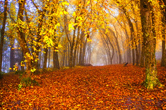 Outono (Miriam Cardoso de Souza) Tags: autumn mist cores photo natureza neblina tunel outono composio