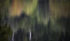 Otoo Reflejo (Roberto Cumsille) Tags: chile red orange white color verde green fall blanco yellow arcoiris rojo amarillo reflejo otoo laguna naranja ue bl conguillio araucania robertocumsille