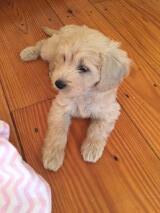 What a cutie!  Dusty is Lucy's Lu's little girl!