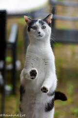 Locked Out (Reinhold.Lotz) Tags: pets de deutschland hessen katzen prinzessin kirtorf