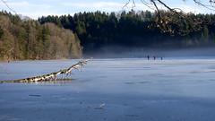 In der Nhe von Kloster Reutberg (cute63cat) Tags: lake fog bayern klosterreutberg