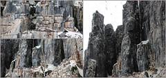 Nesting site on the rocks (carina.ericsson) Tags: mountain rock svalbard thickbilledmurre nestingsite hinlopen spetsbergsgrissla
