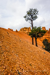 A Long Way to Go (Roshine Photography) Tags: utah us unitedstates redrocks lonetree rockformations panguitch redcanyonstatepark pentaxk3ii 2016utahtrip