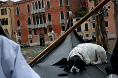 A Careful Snooze (lisa.lindenbaum) Tags: venice italy dog boat canal grande nap ride grand snooze gondola pooch careful
