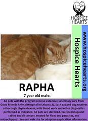 RAPHA (Hospice Hearts) Tags: rescue cats cat illinois feline il foster animalrescue urbana felines champaign volunteer adopt nonprofit hospicehearts wwwhospiceheartsorg