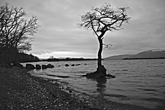 Milarrochy Bay in monochrome. Loch Lomond. (Jen_wilsonphotography) Tags: trees winter blackandwhite mountains tree water monochrome rock landscape scotland nikon scenery rocks scenic loch lochlomond nikond3200 d3200 landscapecaptures milarrocybay