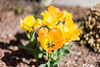 (amber {in the shadow of za'ha'dum}) Tags: travel nature march spring bokeh idaho boise canon5d 50mmf14 boiseidaho 2015 natureycrap