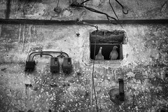 Welcome to my Dove.jpg (Jochem.Herremans) Tags: old city urban bw building abandoned stone architecture demolish flickr belgium dove aged antwerpen doves slachthuis