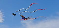 Kites (Eric Shwonek) Tags: flowers nature festival washington tulips tulip tulipfestival mtvernon shwonek