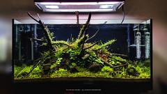 350L - 4 weeks after setup (Filipe Oliveira (FAAO)) Tags: new plant aquarium aquatic freshwater planted elos twinstar aquascaping 350l faao aquaflora filipeoliveira aqvainnova