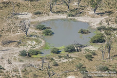 Aerial View Of Giraffe At A Watering Hole In The Okavango Delta, Botswana