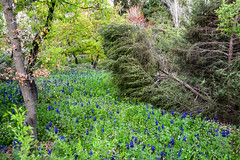 Spring Glade (Joe Aminoff) Tags: flowers plants colour grass spring jerusalem botanicalgardens tress glade isarel