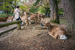 Kansai 2015 (kelvintkn) Tags: city travel people urban colour nature animal japan digital daylight asia sony 28mm streetphotography evil osaka f2 fullframe lightroom autofocus wideanglelens photomatix primelens naraken mirrorless narashi dfine2 sharpenerpro3 emount colourefexpro4 sonyilce7r sonyfe28mmf2