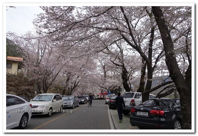화개십리벚꽃길09