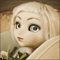 Lova Brove (★ ♥ Pounkie ☠ †) Tags: portrait flower fleur doll squareformat pullip marguerite busta formatcarré vieilli carréfrançais lovabrove