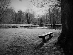 View across the River Awbeg (JulieK (thanks for 8 million views)) Tags: trees ireland blackandwhite bw irish rural bench landscape outdoors countryside shadows view cork scenic hbm donerailepark riverawbeg