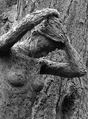 Blend into the tree (flosspot) Tags: wood blackandwhite bw abstract tree lady women sony bark blend camoflague lynettecoates