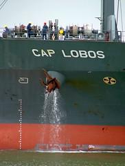 "CAP LOBOS"" - IMO 9148647 (Rick Vince) Tags: imo merchantship containervessel portoffelixstowe merchantvessel 9148647 caplobos"