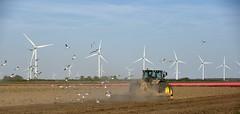work with natures elements :) (Pics4life.nl) Tags: sky tractor holland color nature netherlands windmill birds boer landscape nikon tulips natur nederland natuur farmer nl meeuwen landschap tulpen windmolens