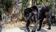 HD Images of the Wild Animals, Wallpapers and backgrounds - Part 4 (PhotographyPLUS) Tags: pictures graphics photos illustrations images stockphotos articles footage stockimage freephoto stockphotograph