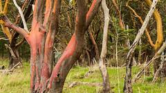 CVPS Hornby 1-3240305.jpg (Nimisha Jimenez) Tags: seagulls clouds waterfall arbutus daffodils hornby vinca treesculpture treetexture fawnlilies cvpsmembers