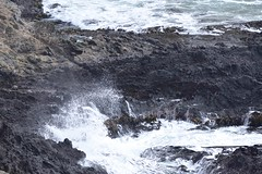 Fur Seals and Waves