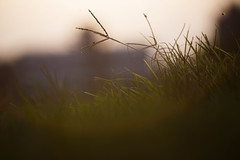 IMG_0129 (sa hadi) Tags: life light sunset shadow red sky sun black color green nature grass canon landscape gold outdoor background smoke cycle serene sa hadi 6d ef70200mm lespedeza sahadi