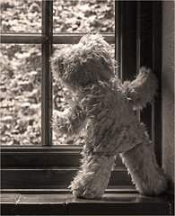 I wonder what it's like out there. (RestlessFiona) Tags: window sepia mono teddy inside restlessfiona 20thjune2016