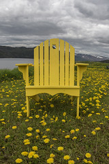 Dandelions with yellow chair (tmeallen) Tags: travel snow yellow clouds newfoundland landscape dandelions tablelands grayday brightcolour norrispoint bonnebay adirondakchair grosmornepark