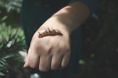 (se van en verano) Tags: jenny mariposa pupa gusano palmares cocaleca