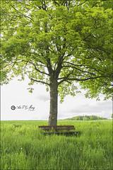 La soledad de un banco (Art.Mary) Tags: tree verde green canon germany bench landscape banco paisaje vert alemania paysage allemagne arbre banc