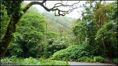 Hana Road(1) (NatePhotos) Tags: road sunset sea hawaii bay waterfall rainbow cows turtle maui hana jungle waterfalls kapalua rooster eel napili 2016 natephotos
