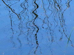 Reflection with Ripples (samfeinstein) Tags: reflection water canon ripple ripples s100 pineypoint