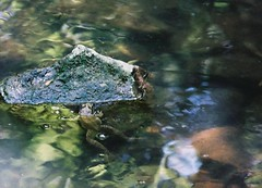 Kermit (k80anderson) Tags: missouri mo devils icebox columbia rock bridge state park rockbridge sinkhole trail flower