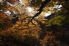 """""""Autumn stillness"""" (Fabio Rage) Tags: patagonia cerro torre fitz roy autumn fall outono los glaciares national park argentina"""