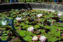 _DSC3824 (Dario Morelli) Tags: boboli pitti giardini palazzo firenze maggio 2016