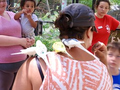 John Ball Zoo (howderfamily.com) Tags: kent michigan budgie grandrapids