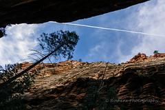 ROSH2360-Edit.jpg (Roshine Photography) Tags: framed bluesky canyon zionnationalpark lonetree narrowpassage pentaxk3ii westrimtrailtoangelslanding 2016utahtrip
